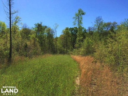 Recreational Homesite With Creek : Villa Rica : Carroll County : Georgia