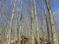 Hans Creek Forest