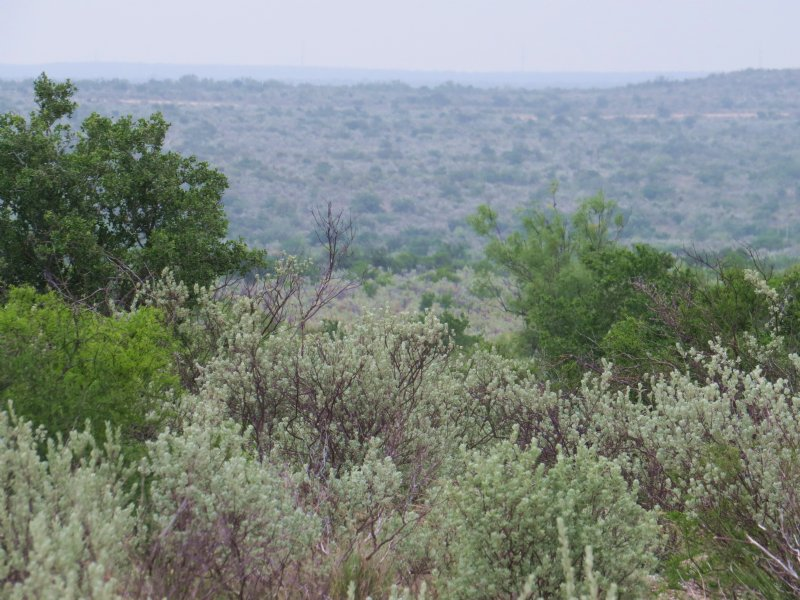Ready For Hunting Season : Comstock : Val Verde County : Texas