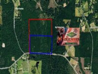 148.40 Acres Hunting Land, Timber