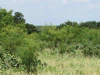Acreage With Well : Eden : Concho County : Texas
