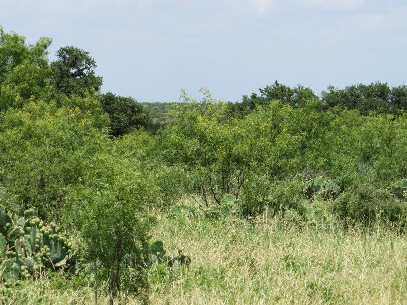 Acreage With Well : Eden : Concho County : Texas