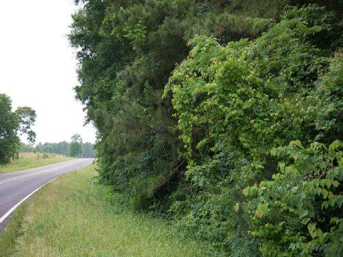 416 Ac Fm 3018 W/T Timber : Oakhurst : San Jacinto County : Texas