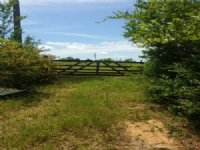 40.00 Acres Hunting Land, Timber