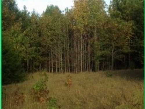 7.5 Acres In Hinds County : Edwards : Hinds County : Mississippi