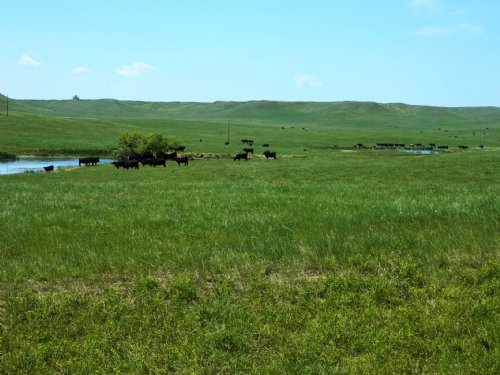 Flasted Home Ranch : Alzada : Carter County : Montana