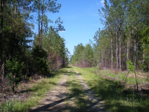 Hunting & Timber Tract : Georgetown County : South Carolina