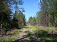 Hunting & Timber Tract