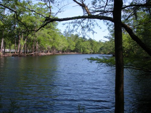 Waccamaw River Acreage : Conway : Horry County : South Carolina