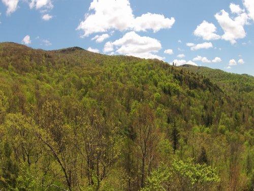 Susie Peak Forest : Ira : Rutland County : Vermont