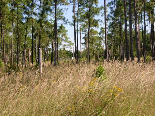 Demille Road 40 Acres : Polk City : Polk County : Florida