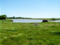 6/16 Auction: 240 Acres- Wellington