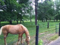 Gulsby Mini Farm : Mathews : Montgomery County : Alabama