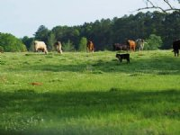 194.00 Acres Cattle Farm Land