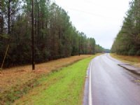 32.60 Acres Hunting Land, Timber
