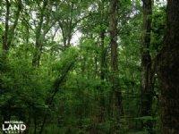 20 Acre Plum Bayou Hardwoods And De