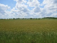154+/- Ac Tillable & Pasture