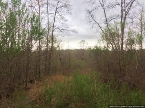 140± Acres Of Hunting Land : Lexington : Holmes County : Mississippi