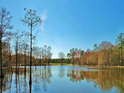 Cypress Pond - Worth County, Ga : Sylvester : Worth County : Georgia