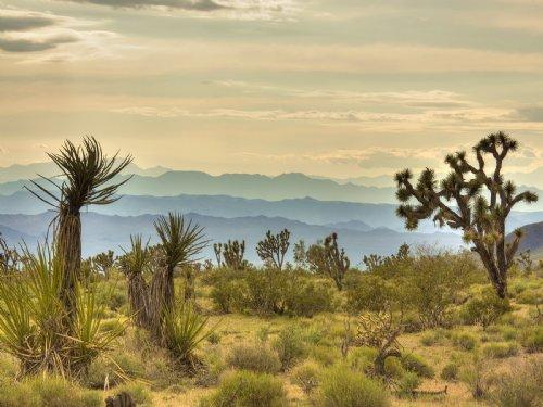 Mountain View Sale : White Hills : Mohave County : Arizona