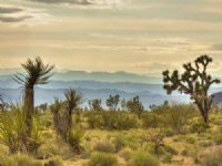 Mountain View Sale : White Hills : Mohave County : Arizona