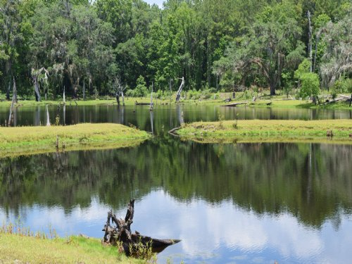 102 Acres With Small Lake : Brooksville : Hernando County : Florida
