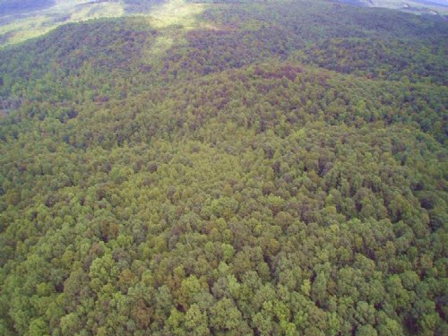 195+/- Ac Outdoor Enthusiast Wanted : Palmer : Grundy County : Tennessee