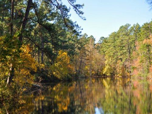 51.5 Ac Cr 4005 : Timpson : Shelby County : Texas