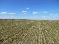 Morehead Dryland & Crp : Alliance : Box Butte County : Nebraska