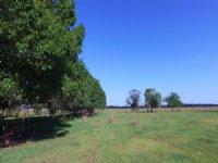 Lake Okeechobee Est. Cattle Ranch : Okeechobee : Okeechobee County : Florida