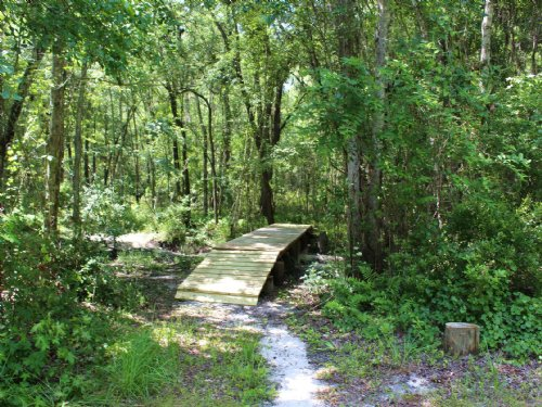 43.74 Ac For Hunting And Timber : La Crosse : Alachua County : Florida