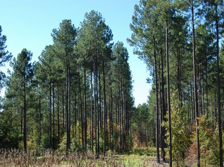 451 Acre Recreational Tract : Chester : Chester County : South Carolina