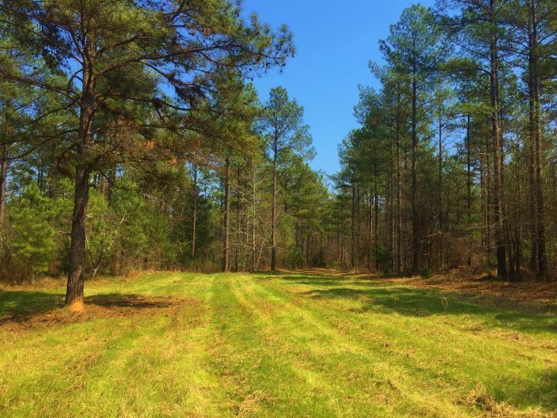 Reduced 2500 Per/Acre : Lexington : Oglethorpe County : Georgia