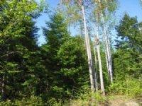 Affordable Beautiful Grand Isle : Grand Isle : Aroostook County : Maine