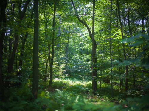 Lrg Acreage Sale : Roaring Brook : Lackawanna County : Pennsylvania