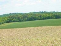 154 Acres Tillable Farmland