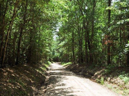 42 Ac Wilderness Rd : Point Blank : San Jacinto County : Texas