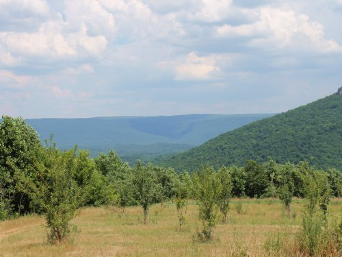 200+/- Acre Orchard / Veg Farm : Flat Rock : DeKalb County : Alabama