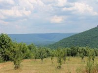 200+/- Acre Orchard / Veg Farm : Flat Rock : DeKalb County : Alabama