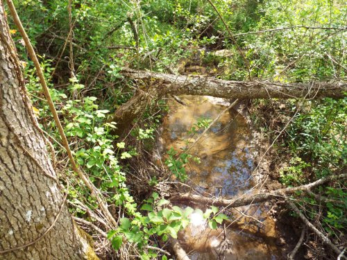 41 Gently Rolling Acres With Creek : Crossville : Cumberland County : Tennessee