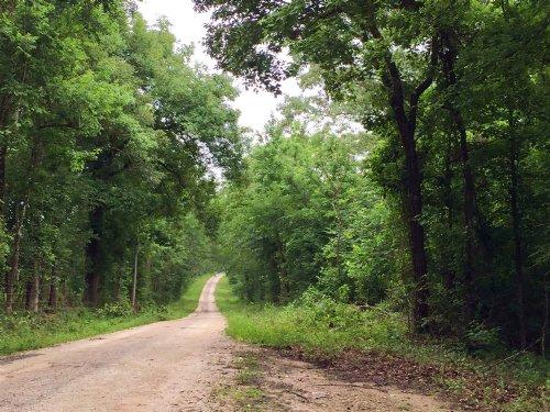 181 Acres Stephen Creek : Coldspring : San Jacinto County : Texas