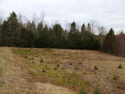 Sandy Pond 45 Acre Kingdom Parcel : Montville : Waldo County : Maine