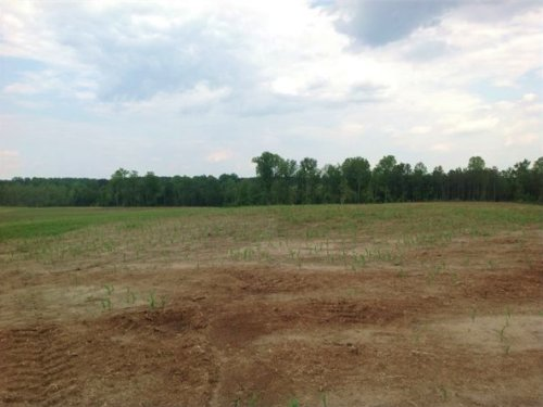 264 Acres In Chesterfield, Sc : Chesterfield : South Carolina