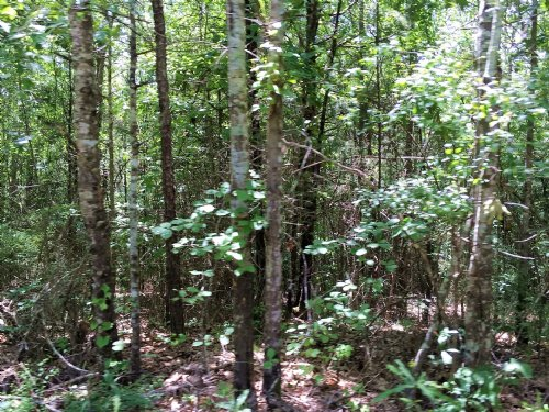Gales 26 Acre Tract : Marion : Perry County : Alabama