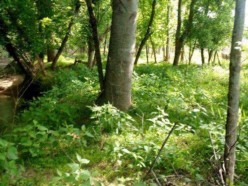Park Creek Tract : Abbeville : South Carolina