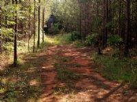 Saluda River Acreage : Ware Shoals : Greenwood County : South Carolina