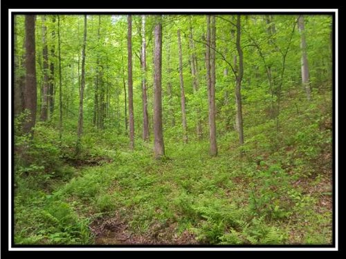 Hidden Woods At Dark Hollow : Jackson : Ohio