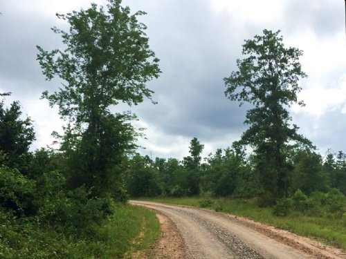 8 Acres Willow Springs Rd : Oakhurst : San Jacinto County : Texas
