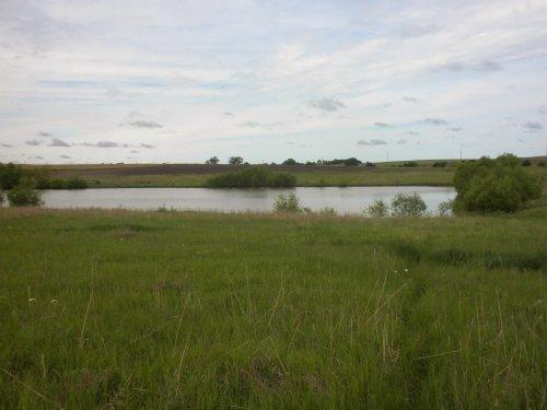 Clay County Farm & Pheasants : Clay Center : Clay County : Kansas