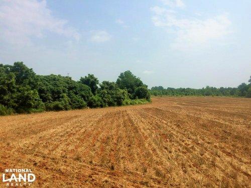 Bishopville Farming, Timber & Hunti : Bishopville : Lee County : South Carolina